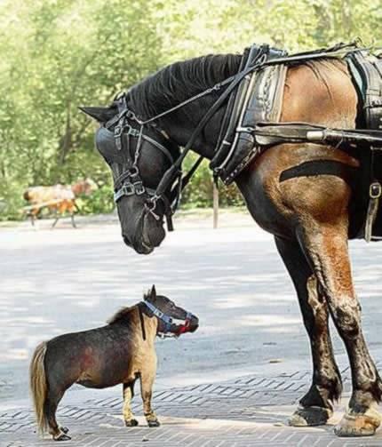 a264horse-2.jpg