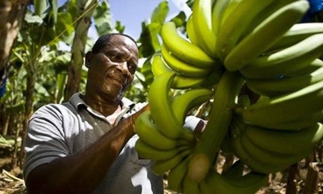 bananafarmer009660x550.jpg