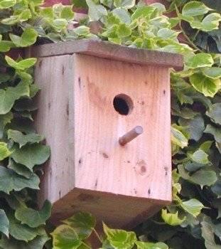 birdbox311x350.jpg