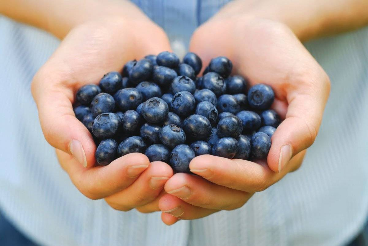 blueberriesinhandshutterstock8400148.jpg