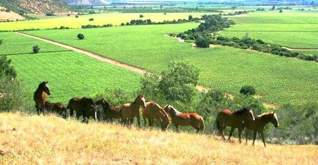 caballossalvajes1.jpg