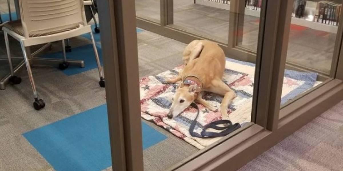 Foto del perrito más triste del mundo se roba el corazón de las redes