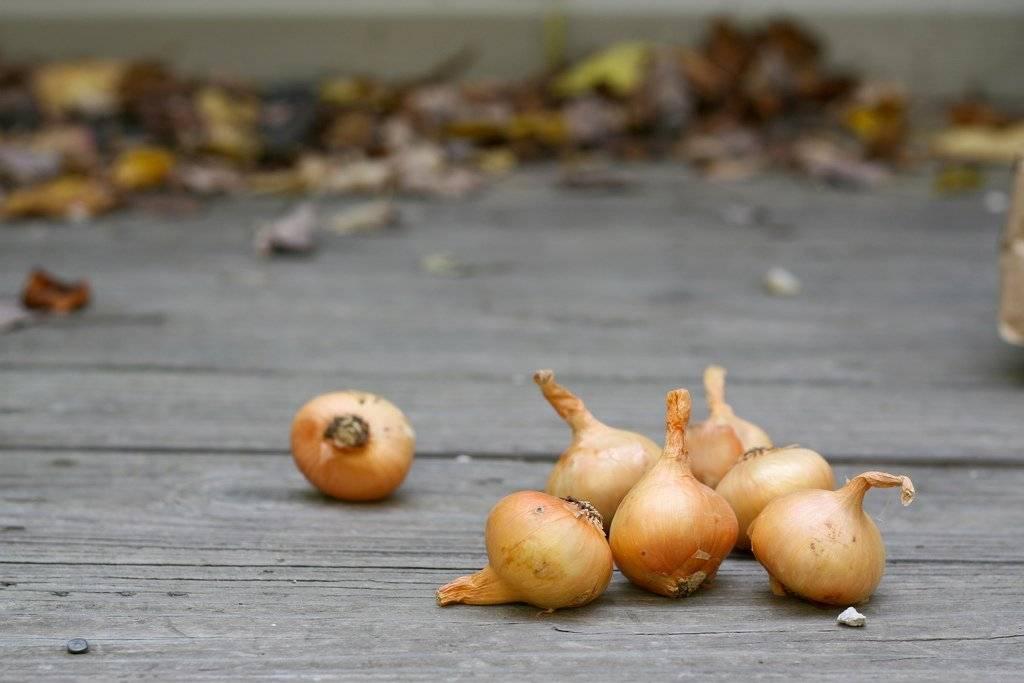 cebolla-3.jpg