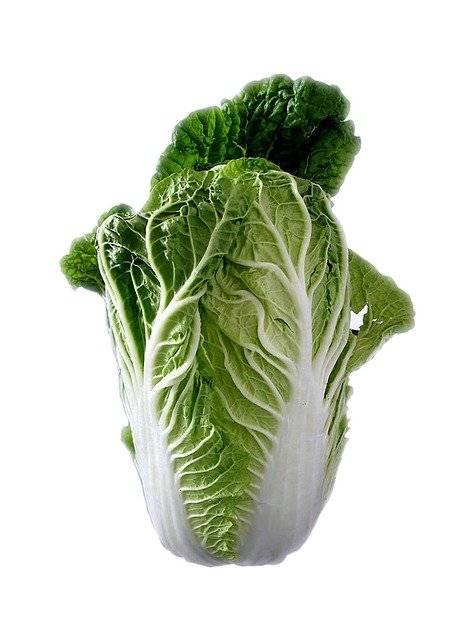 chinesecabbage74360640.jpg