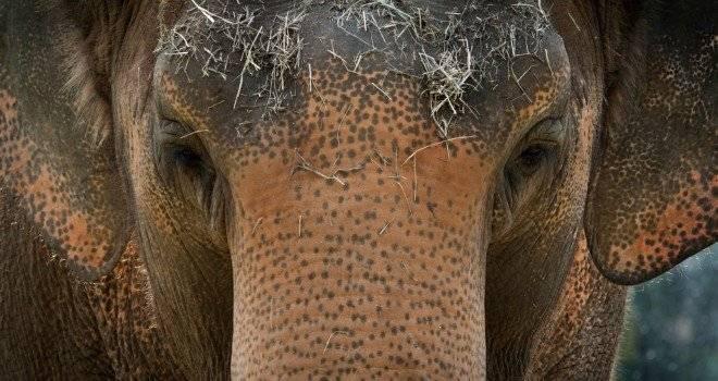 elefante1.jpg