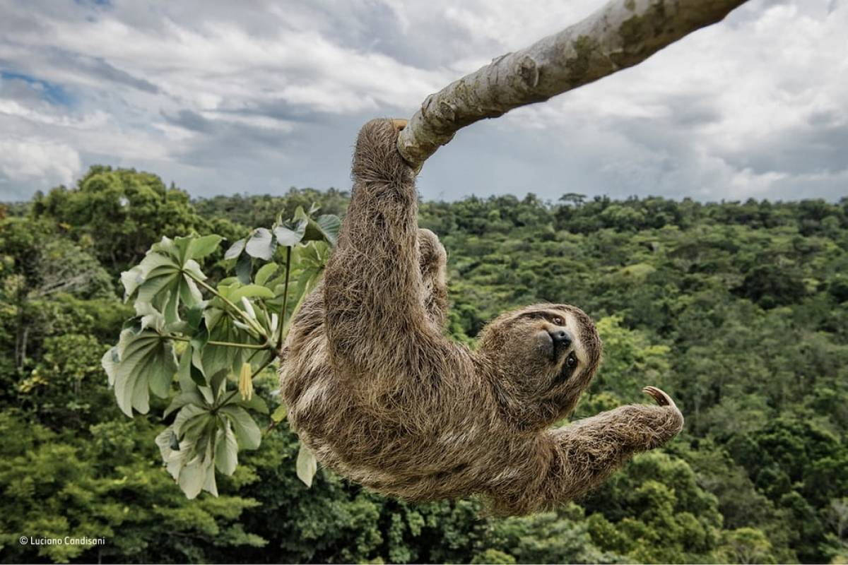 Reprodução / Wildlife Photographer of the Year People