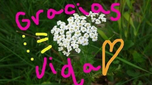 graciasvida520x292.jpg