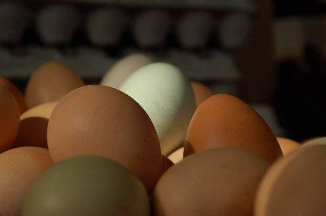 huevos1660x438.jpg