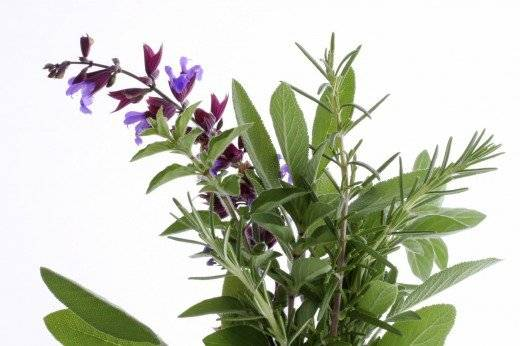 lavendersageandrosemary520x346.jpg