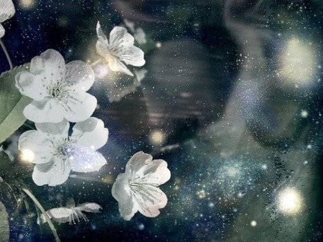 moonflower466x350.jpg