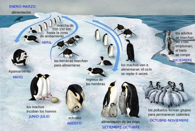 penguinlifecyclees-2.jpg