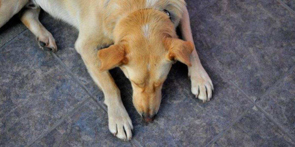 Su perra entró a la casa del vecino y acabó violada