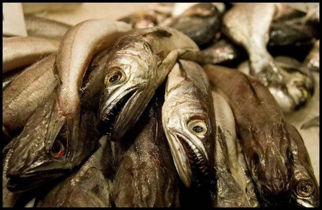 pescados660x430-2.jpg