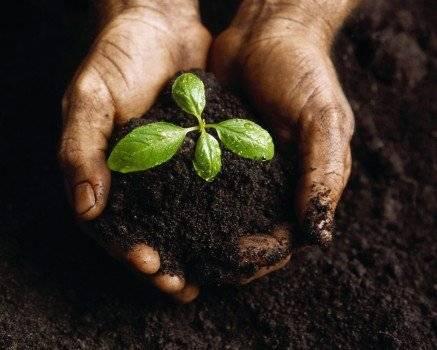 plantnurturedbyhands2437x350.jpg