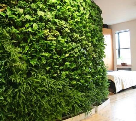 plantwall1.jpg