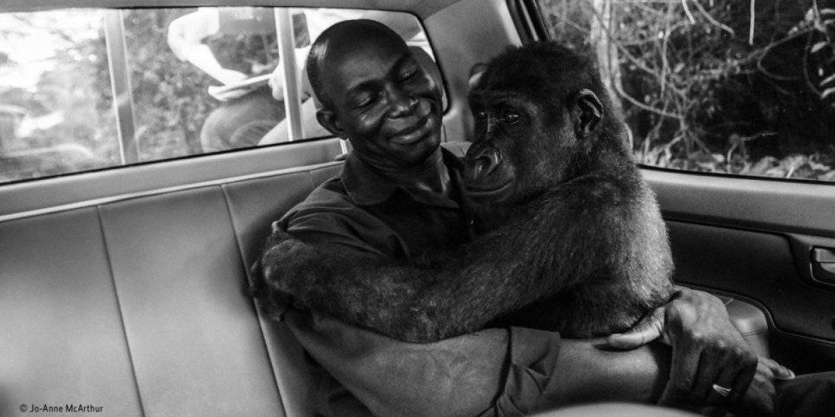 A história por trás da imagem que ganhou o prêmio de Melhor Fotógrafo de Vida Silvestre 2018