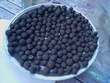 seedballs466x350.jpg