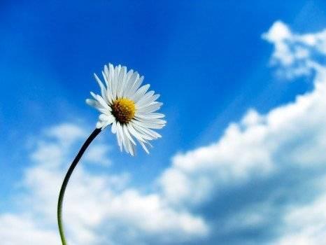skyflower567466x350.jpg