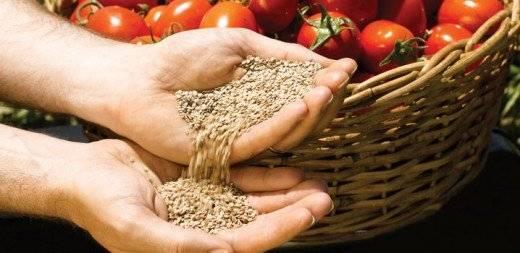 tomate520x253.jpg