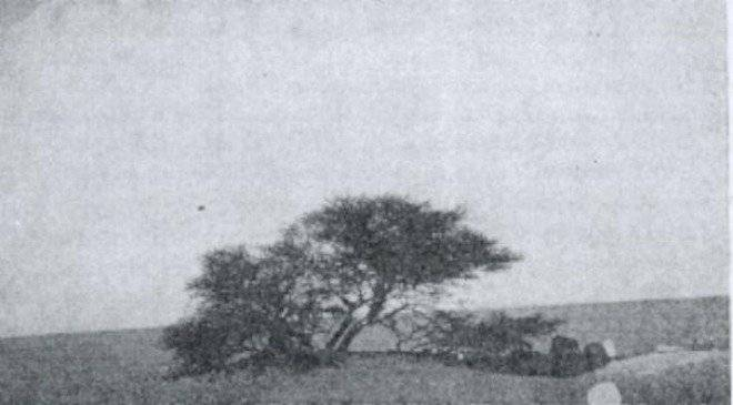 treeoftenere1939.jpg