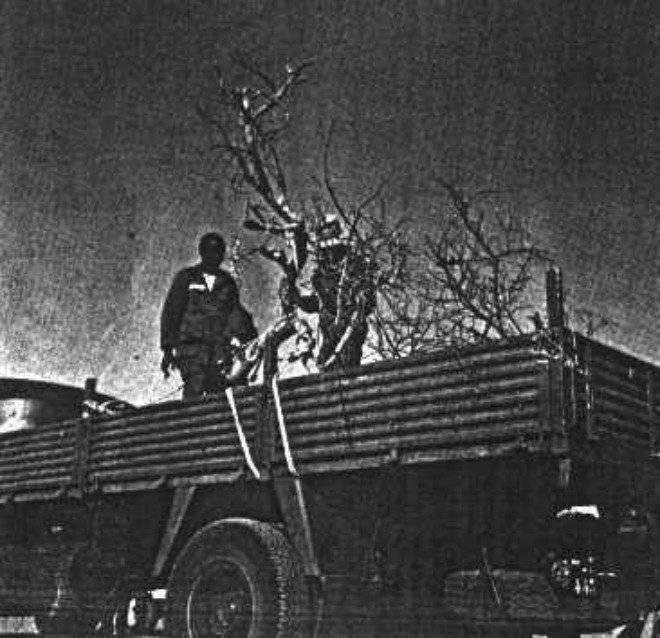 treeoftenere1973.jpg