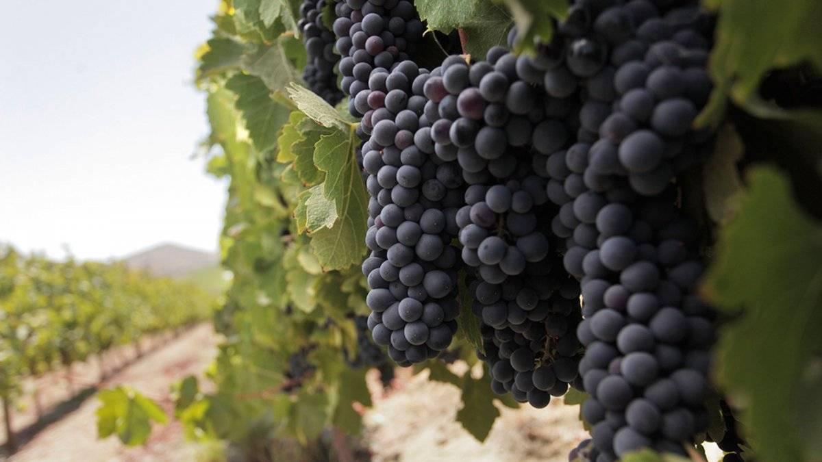 vinoschilenos2015.jpg