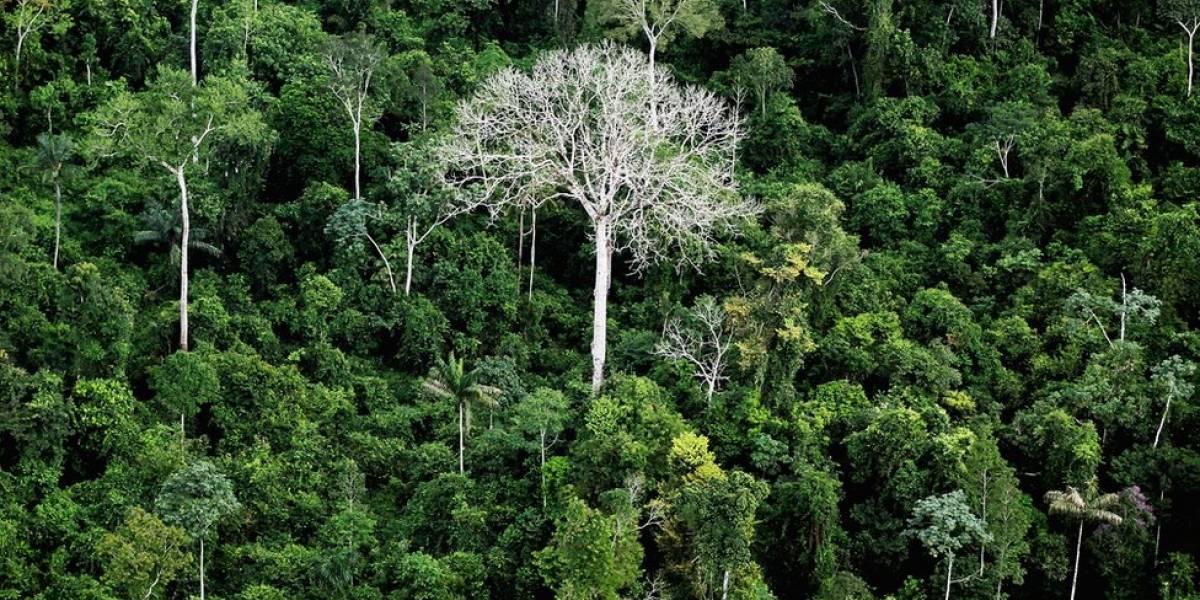 PF investiga esquema de extração ilegal de madeira na floresta amazônica