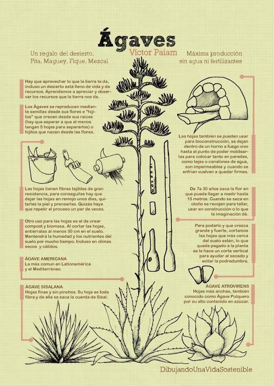 agaves.jpg