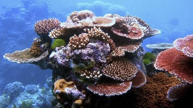 arrecifesveracruz02660x550-1.jpg