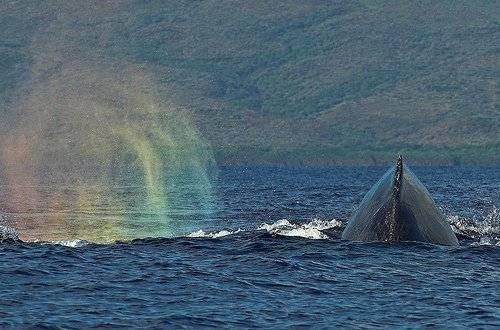 ballena-3.jpg
