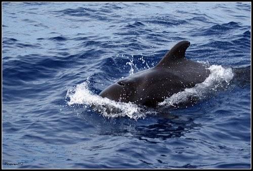 ballenas-2.jpg