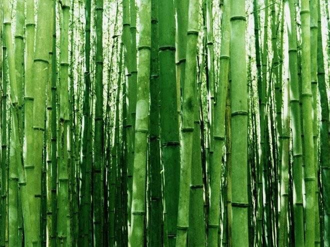bamboowallpaper660x495.jpg