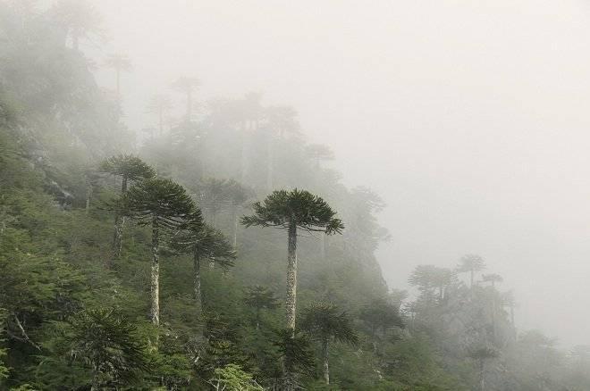 bosquescontaminacion.jpg