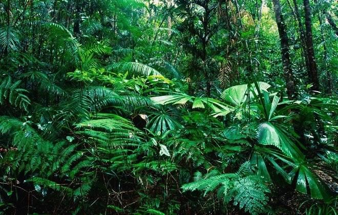 bosquetropical1.jpg
