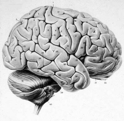 cerebro3.jpg