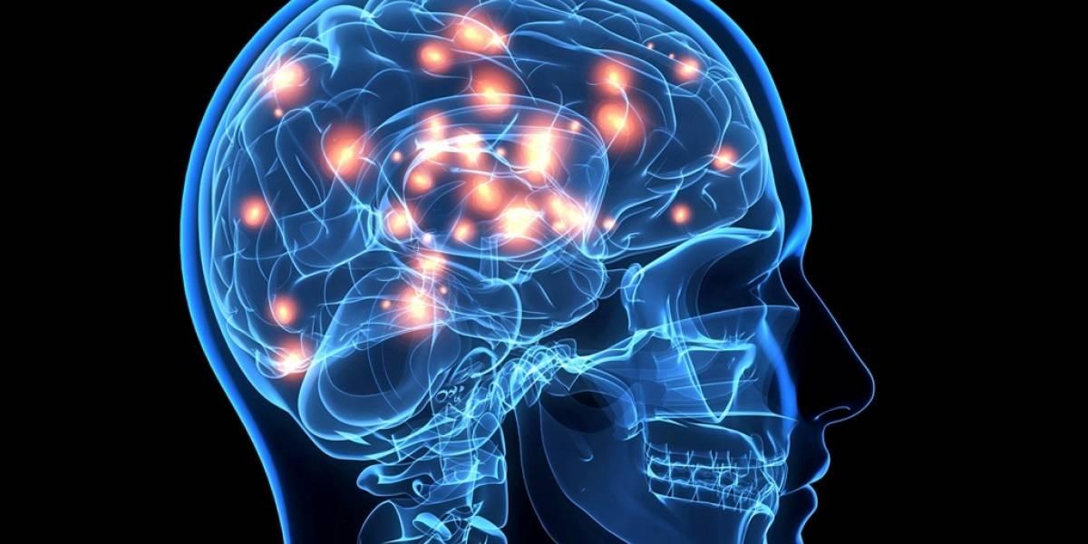 Interruptor cerebral controla la quema de grasas del cuerpo