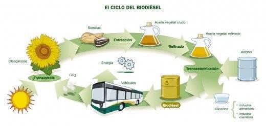 ciclobiodiesel21520x248.jpg