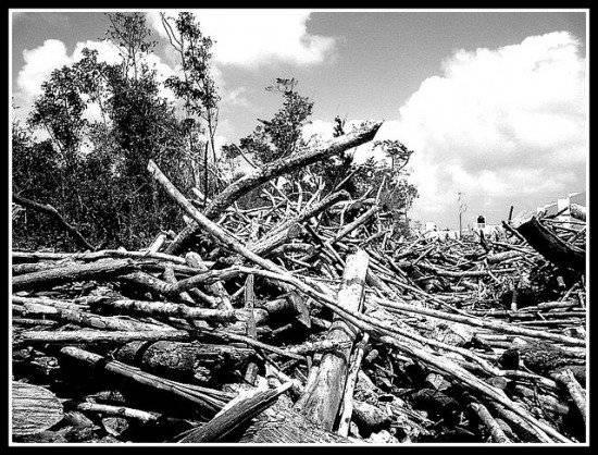 deforestacion550x418.jpg