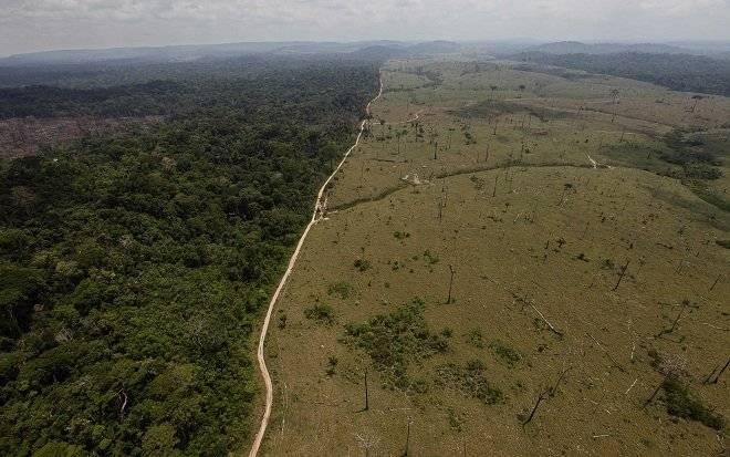 deforestacion6.jpg