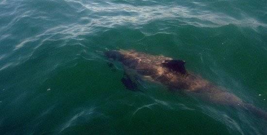 delfin550x278.jpg