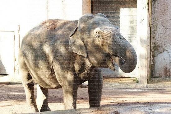 elefante550x366.jpg