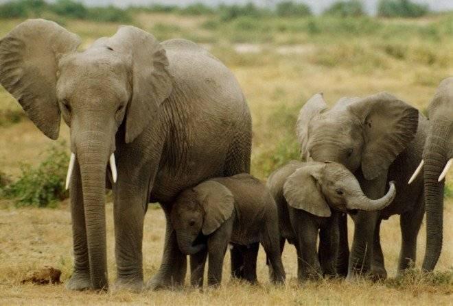 elephants660x550-1.jpg