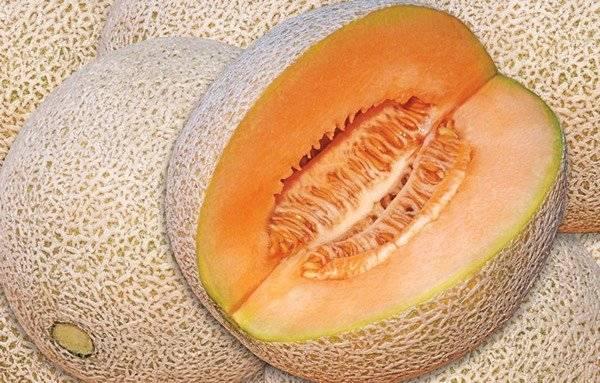elmelonfrutamedicinal660x550.jpg