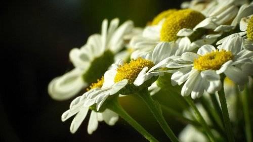 flores-2.jpg