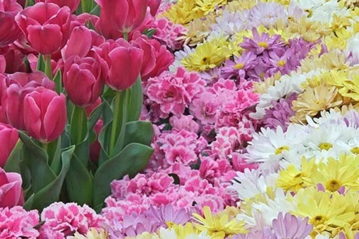 Que Significan Las Flores Que Te Regalan Belelu Nueva Mujer