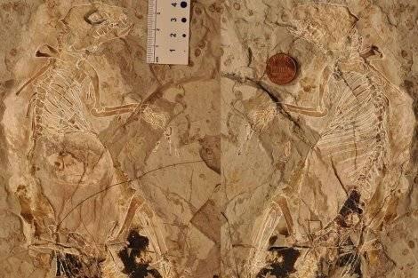 fosilmegaconus.jpg
