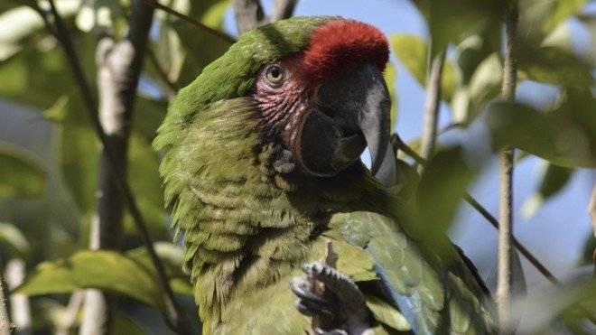 guacamayaverde660x550.jpg