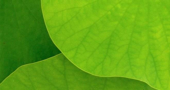 hojas-2.jpg