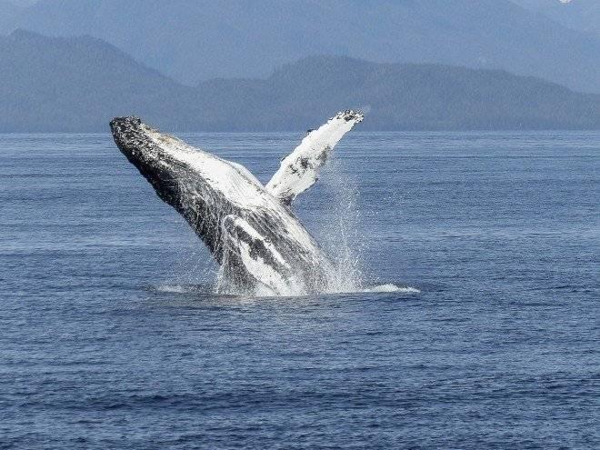 humpbackwhale4361151920660x550.jpg
