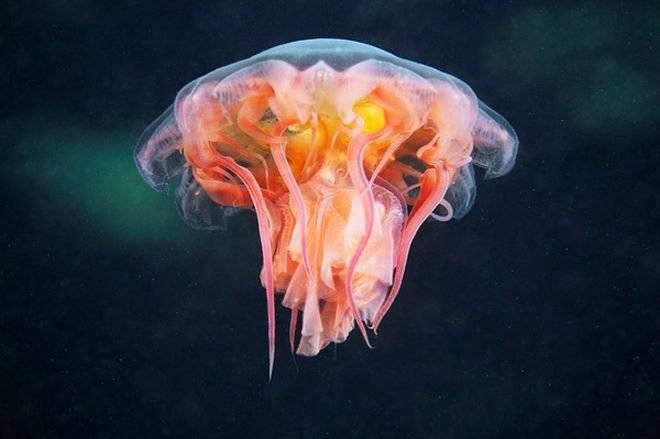 jelly6.jpg